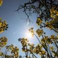 A mudança climática já afeta espécies de plantas daAustrália, alterando o tamanho das folhas. É o que aponta uma pesquisa realizada por cientistas da Universidade de Adelaide, na Austrália, divulgada […]
