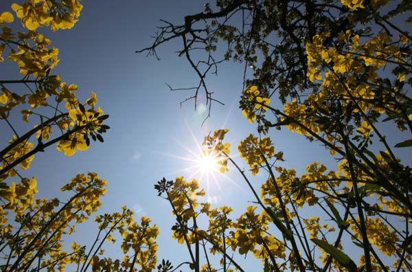 Clima mais quente já afeta tamanho de plantas na Austrália, diz estudo