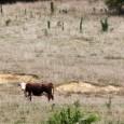 A seca extrema que atingiu o Oeste da América do Norte entre 2000 e 2004 foi considerada por pesquisadores como a pior dos últimos 800 anos, deixando à beira da […]