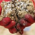 Centenas de milhões de pequenas bolinhas de plástico, potencialmente tóxicas, surgiram nas praias de Hong Kong há mais de uma semana, depois de que seus contêineres caíram de uma embarcação […]