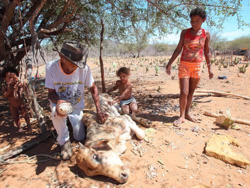 CONSIDERADA A pior dos últimos 30 anos, a seca no Nordeste já afeta 8 milhões de pessoas Hans Von Manteuffel