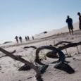 O mês de julho chega, a chuva cessa, e as dunas brancas e finas dos Lençóis Maranhenses ficam entremeadas por milhares de lagoas azuis, num cenário difícil de se comparar […]