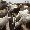 As secas severas em diferentes regiões do mundo estão causando uma alta nos preços dos alimentos. A informação foi divulgada na terça-feira, 21 de agosto, pela Organização Mundial de Meteorologia […]