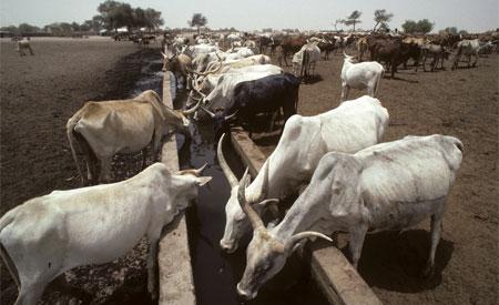 Cerca de 63% do território americano e metade dos distritos da Índia estão sofrendo com a seca. Foto: UN Photo/John Isaac