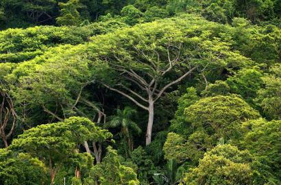 Brasileira é escolhida pela ONU para criar metas globais sustentáveis