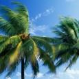 Um estudo de pesquisadores da Universidade de Glasgow, no Reino Unido, revelou pistas da presença de palmeiras no território da atual Antártida há 53 milhões, durante a época geológica do […]