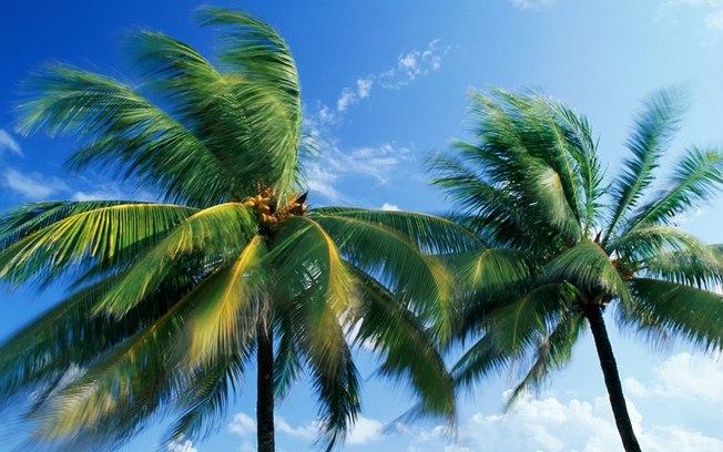 Antártida tinha palmeiras há 53 milhões de anos, afirma pesquisa