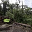 O Imazon lançou neste início de agosto oBoletim Transparência Manejo Florestal do Pará, queavaliou a situação da exploração madeireira no estado de agosto de 2009 a julho de 2010. O […]