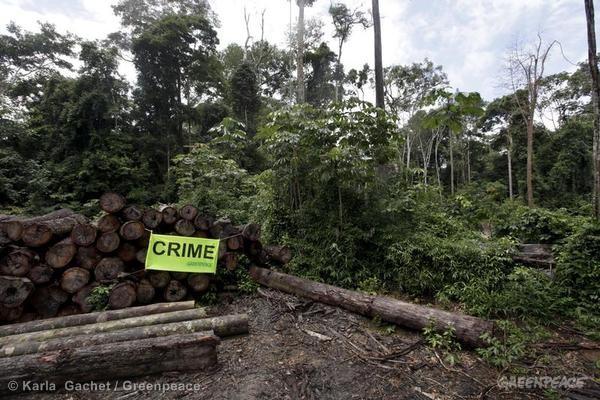 """A palavra """"crime"""" denuncia a retirada ilegal de madeira dentro do assentamento Corta-Corda, no Pará. (©Greenpeace/Karla Gachet)"""