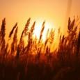 De acordo com diretor-geral da Organização das Nações Unidas para Alimentação e Agricultura, muitos incentivos à produção de biocombustíveis em tempos de instabilidade climática podem levar a crise no setor […]