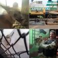 O comando do Batalhão Ambiental da Polícia Militar do Distrito Federal divulgou nesta sexta-feira (17) que o número de crimes ambientais contra a fauna no DF teve uma redução de […]