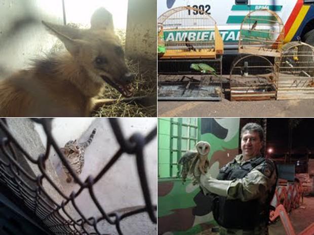Animais recolhidos por militares do Batalhão de Polícia Ambiental do DF (Fotos: Divulgação/Batalhão de Polícia Ambiental )
