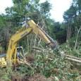 """No dia 23 de julho, o Instituto CarbonoBrasil publicoua notíciasobreum novo estudodefendendo que """"uma extração industrial de madeira em florestas tropicais primárias que seja sustentável e rentável é impossível"""". Realizado […]"""