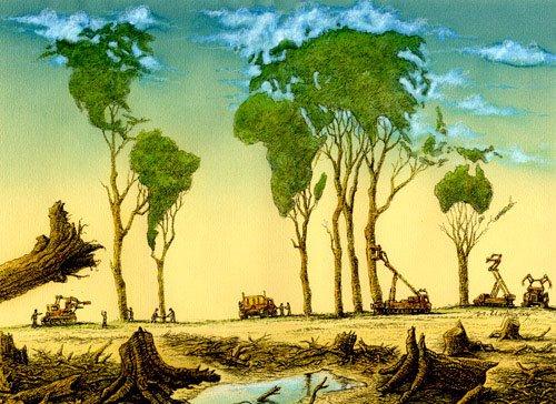Brasil recebe incentivo para monitoramento do desmatamento