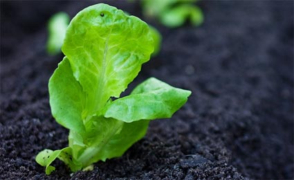 Horta orgânica: comida saborosa, saudável e sustentável.