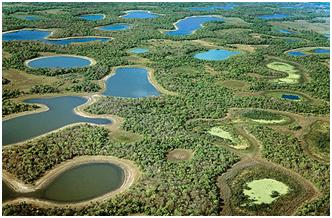 Hidrelétricas comprometem conservação do Pantanal