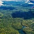 Na região da Amazônia, as plantas emitem sais de potássio que formam as nuvens, as quais abrigam as partículas aerossóis responsáveis por causar chuva. Esse é o resultado de um […]