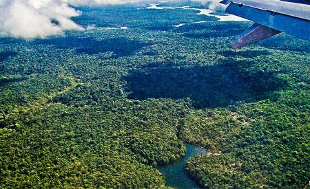 O fenômeno só ocorre em florestas de vegetação arbórea, mas não gramínea. Foto: lubasi