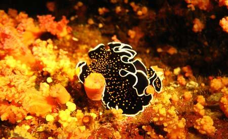 Os corais do Caribe diminuíram de 50%, em 1970, para 8% em 2012. Foto: Sxc.hu