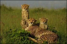Vida selvagem é bem nacional no Quênia