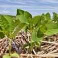Dois mil e doze era para ser um bom ano para asafra mundial de milho, soja e trigo, pelas previsões daOrganização das Nações Unidas para Agricultura e Alimentação (FAO). Mas […]