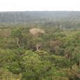 Cientistas estudaram como a densidade das florestas afeta o volume de chuvas entre os trópicos, a partir de dados obtidos por satélite O desmatamento em grande escala da Floresta Amazônica […]