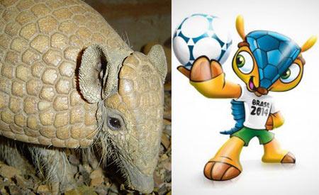 A escolha do tatu-bola para mascote vai possibilitar maior visibilidade ao animal ameaçado de extinção Foto1:mottazoo/Foto2: Divulgação
