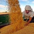 Apesar do impacto da crise global, a economia da Argentina começa a se reerguer pelas mãos do auge dos preços da soja e das vendas industriais para o Brasil, mas […]