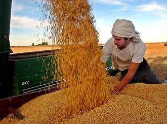 Colheita de soja na Argentina. Foto: dw.de