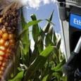 Nos últimos anos, a demanda por bicombustíveis, supostamente ambientalmente amigáveis, aumentou de forma significativa em todo o mundo; por um lado, o que resultou no aumento do cultivo de plantas […]