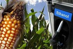 """A maioria dos biocombustíveis não é """"verde"""", diz pesquisa"""