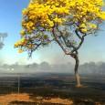 Neste dia da árvore ((o))eco homenageia o Ipê-amarelo. As árvores desta espécie proporcionam um belo espetáculo com sua bela floração na arborização de ruas em algumas cidades brasileiras. São lindas […]