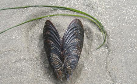 Os invertebrados constituem quase 80% das espécies do mundo Foto: sxc.hu