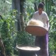 Para muitas pessoas, a conservação de florestas é um processo que serve para preservar os ecossistemas e a biodiversidade de nosso planeta, mas que dificulta o crescimento e a economia […]