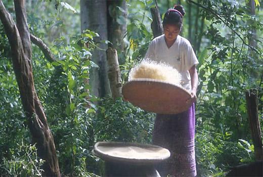Restauração de florestas impulsiona economias locais e reduz pobreza