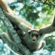 Cinco espécies brasileiras de animais estão entre as cem mais ameaçadas de extinção no planeta, de acordo com uma lista publicada nesta terça-feira (11) pela Sociedade Zoológica de Londres. As […]