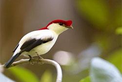 IUCN lançará Lista Verde das espécies protegidas