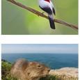 A União Internacional de Conservação da Natureza (IUCN) divulgou na terça-feira (11), durante o Congresso Mundial de Conservação na Coreia do Sul, a lista das 100 espécies mais ameaçadas de […]