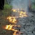 Em dez dias, mais de 24,5 mil focos de incêndio foram identificados no país. A baixa umidade e as temperaturas altas, típicas dos meses de agosto e setembro, proporcionaram as […]