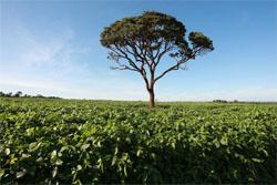 Agricultura é apontada como grande vilã do desmatamento