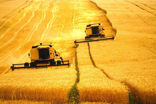 Modelo agrícola desperdiça 35% da produção brasileira