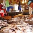 A presidenta Dilma Rousseff disse nesta segunda-feira (22) que o governo vai investir R$ 4,1 bilhões até 2014 na produção de pescado no país. A meta é dobrar a produção […]