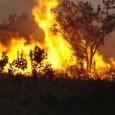 Para entender como as emissões de queimadas na Amazônia estão alterando o clima local e de todo o planeta, um grupo de pesquisadores brasileiros e britânicos tem sobrevoado a região […]
