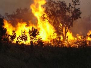 Pesquisa coleta dados sobre emissões de queimadas na Amazônia