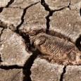 Uma novapesquisapublicada na última semana no periódico Science revelou que um surto de aquecimento global ocorrido há cerca de 250 milhões de anos pode ter atrasado a recuperação da vida […]