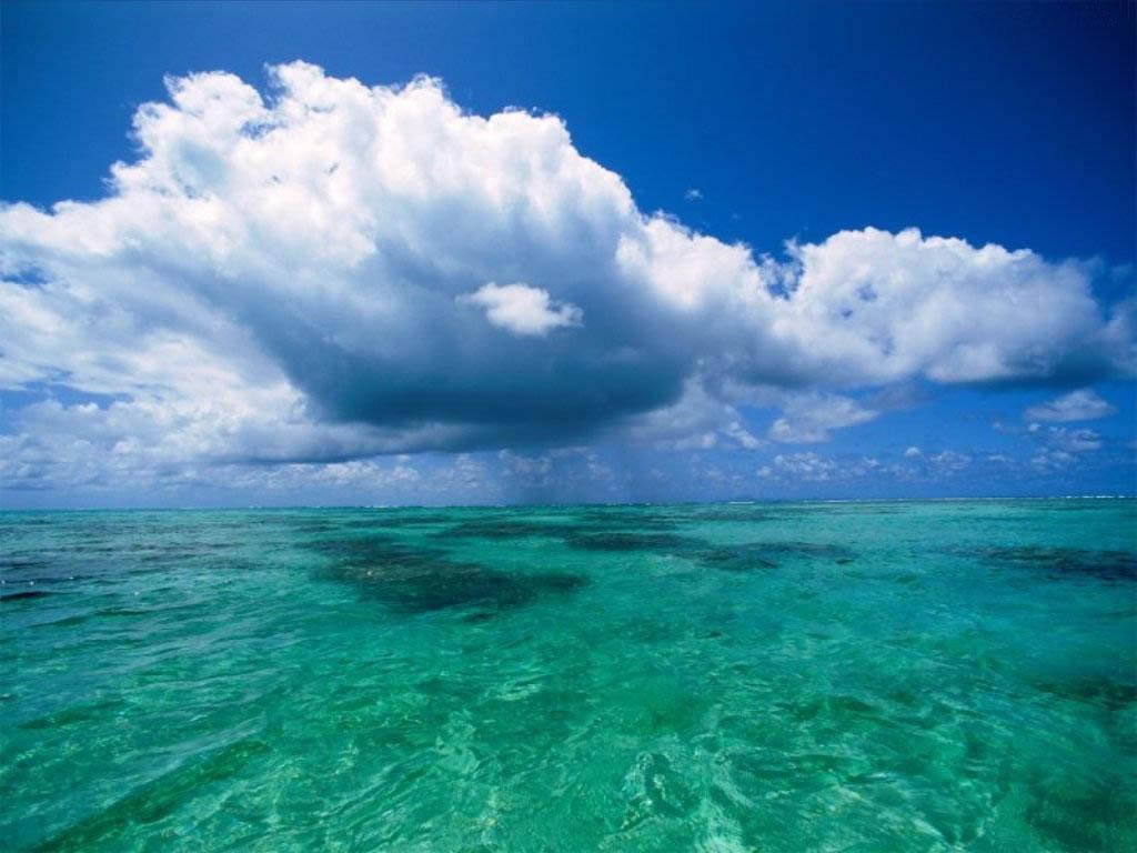 Sobrepesca e ausência de planos de manejo põem em risco oceanos no Brasil