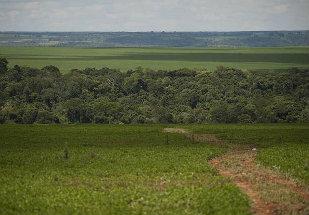 Cidade de Alta Floresta (MT) está na lista de municípios que mais desmatam a Amazônia