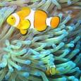Em menos de dez anos, pouco, ou nada, restará da Grande Barreira de Corais da Austrália, de 2.300 quilômetros de comprimento, alerta um estudo científico divulgado ontem. A menos que […]