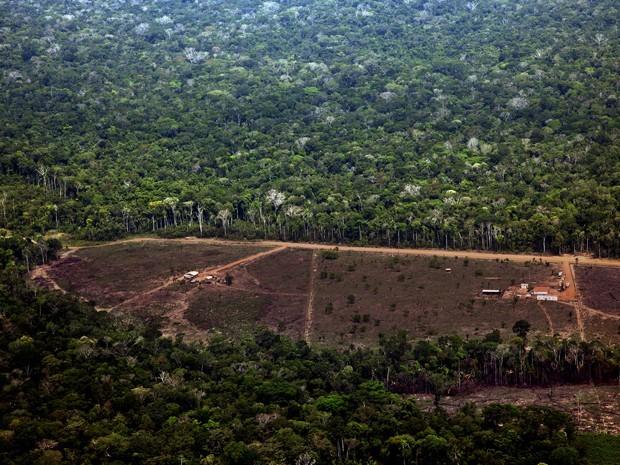 Desmatamento registrado em Porto Velho, Rondônia (Foto: Divulgação/Greenpeace/Marizilda Cruppe/EVE)