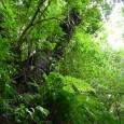 O Programa das Nações Unidas para o Desenvolvimento (PNUD) revelou nesta quinta-feira (18), na 11ª Conferência das Partes sobre Biodiversidade (COP 11), um novo plano para lidar com os níveis […]